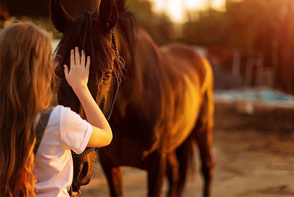 equine facilitated psychotherapy, girl brushing a horse's head